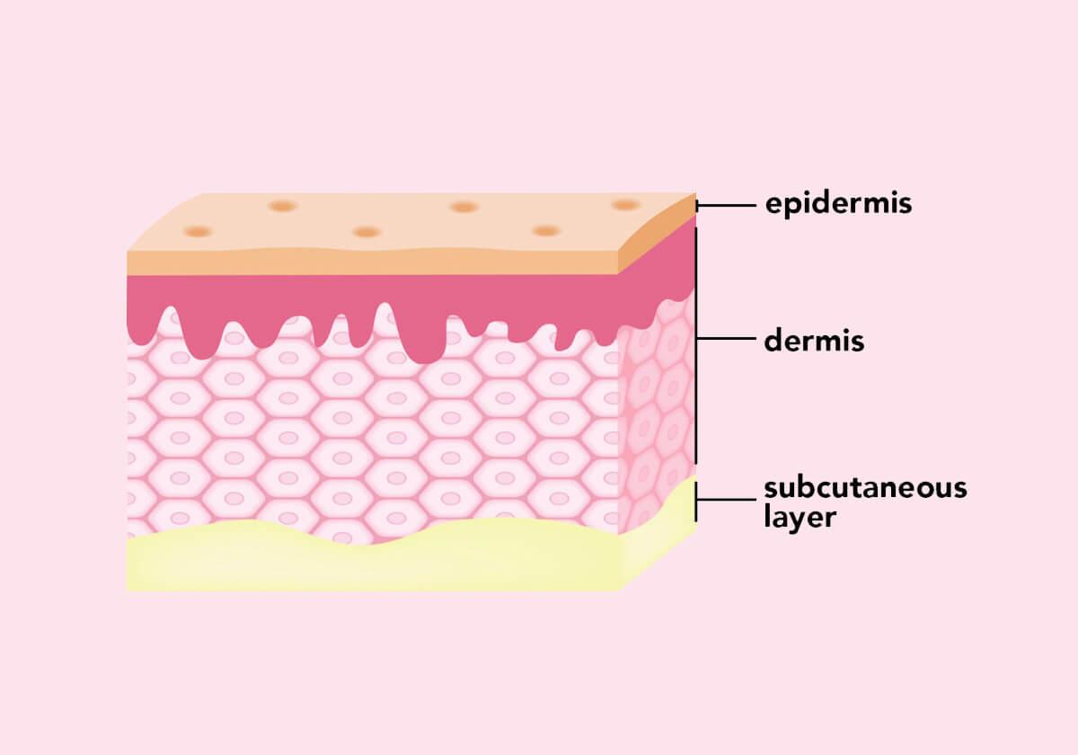 come è fatta la nostra pelle